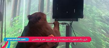 بازی یک میمون با استفاده از رابط کاربری مغز و ماشین